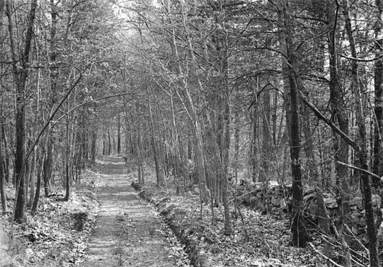 Road through woods, back of Farmer's