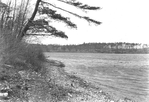 Herbert Wendell Gleason. Stony shore of Walden Pond,--south shore, leaning pine