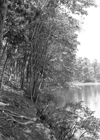 Herbert Wendell Gleason.  Indian path by Thoreau's Cove, Walden Pond