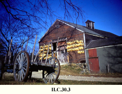 Barn with corn, Sudbury, MA