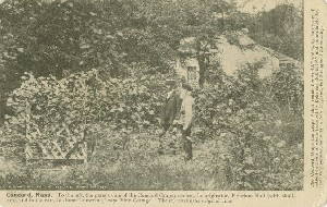 [Will Bradley and Ephraim  	Bull observe the parent vine of the Concord Grapes in front of Grapevine Cottage]; 1907 (copyright date)